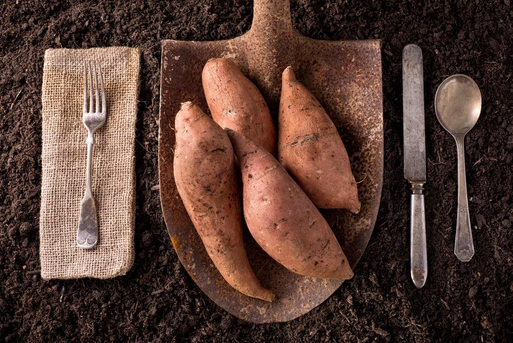 batata-doce carbs carboidrato complexo
