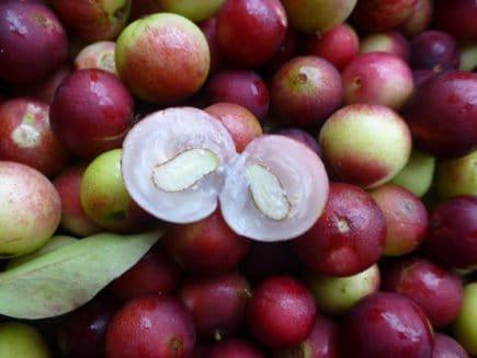 frutas brasileiras 4