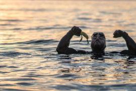 Homem entra para Guinness após nadar 2864 km ao redor da Grã-Bretanha